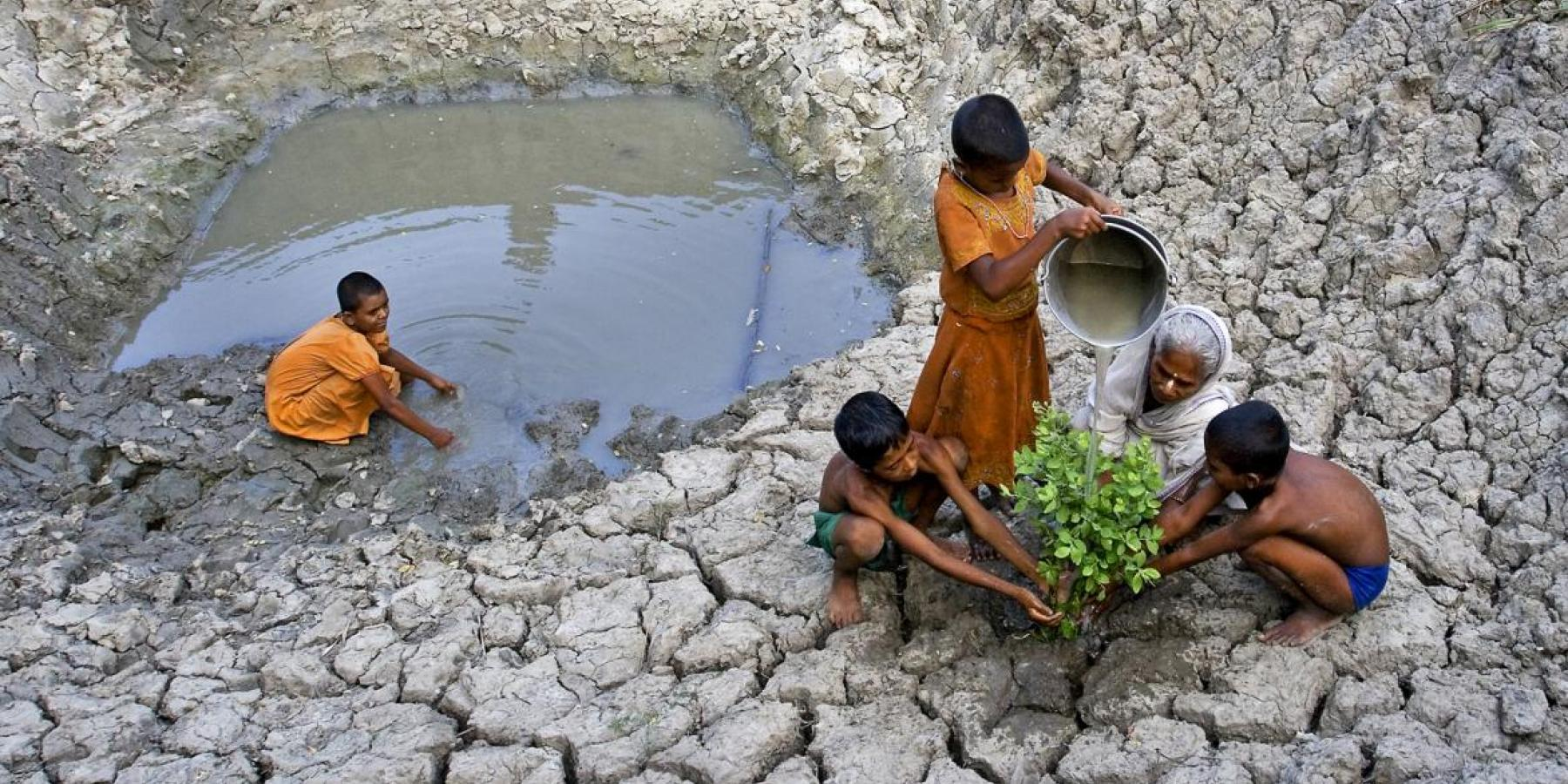 A grandmother and her grandchildren plant a tree in a drought-stricken rural area of West Bengal, India.
