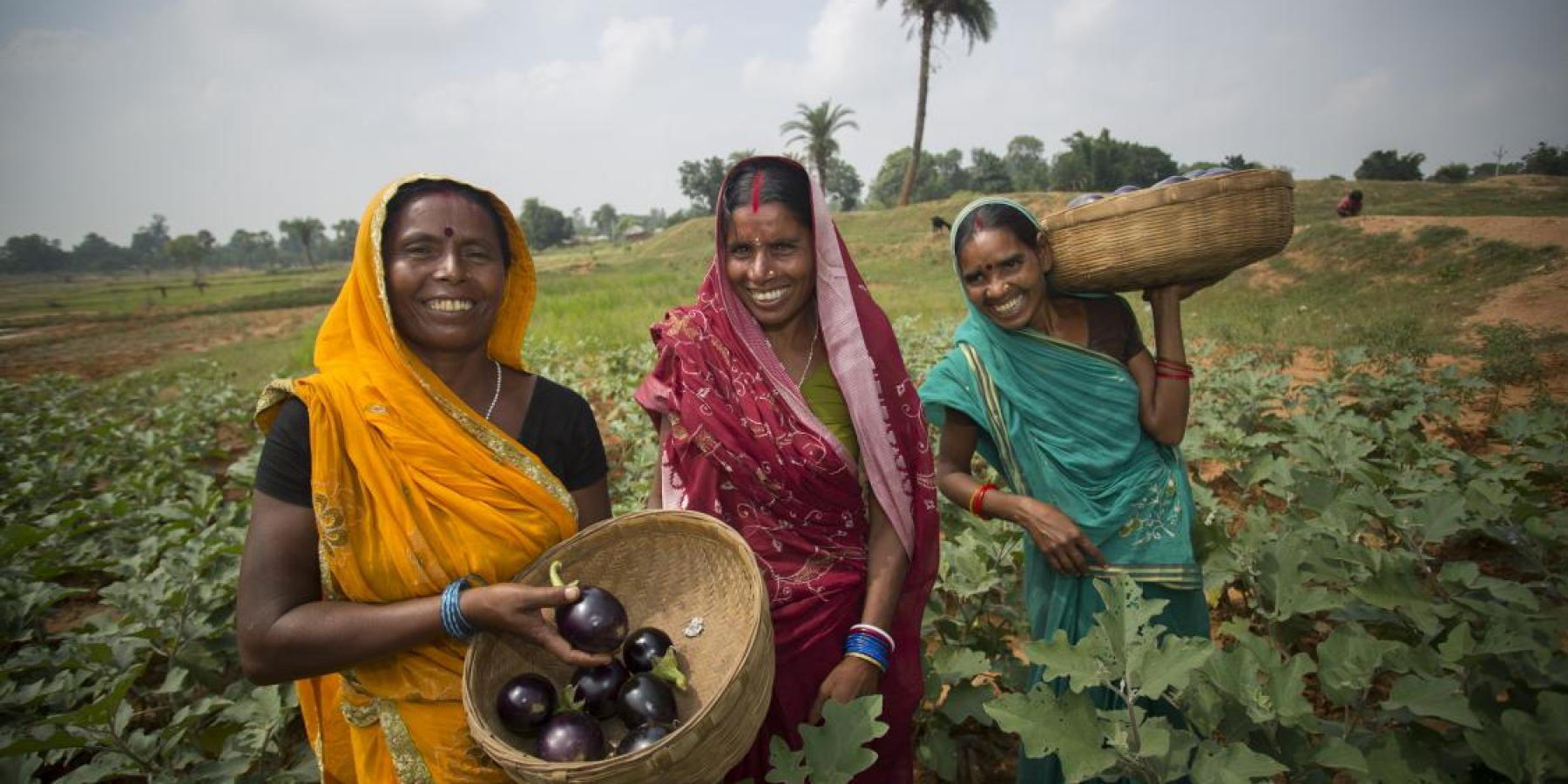 Jake Lyell Geeta Devi, Sumitra Devi and Mina Devi are farmers in the Banka District of Bihar, one of the poorest districts in India